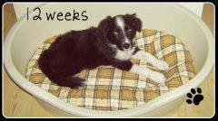 12 weken oud !