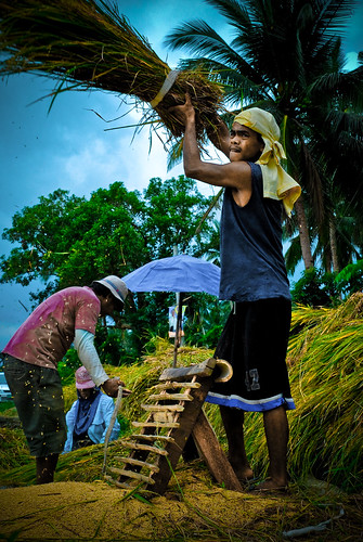 farm farming farmer magdalena laguna treshing harvest Pinoy Filipino Pilipino Buhay  people pictures photos life Philippinen  菲律宾  菲律賓  필리핀(공화국) Philippines,rural
