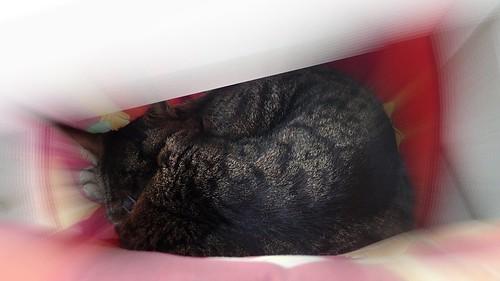 Tabby sleeping