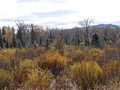 The fall foliage in Grand Teton National Park, Wyoming (Hazboy) Tags: park autumn usa mountains west fall nature beautiful us nationalpark wildlife united foliage western states wyoming teton parc grandteton sagebrush hazboy hazboy1