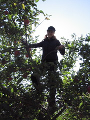 Sarah up a tree