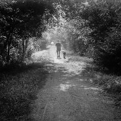 Humid Summer Walkies (BunnySafari) Tags: fpp yashica124g twinlens ilford400 developityourself bw dog walk film summer humid