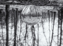 Forest Simplicity (Martijn van Sabben) Tags: snow white snowing cold winter glassball holland nederland terapel forest tree trees nature naturelover naturephotography olympus getolympus defotoblogger m43nl dutch outside outdoors blackandwhite bnw monochrome ngc staatsbosbeheer lines black grey effect mirror reflection cooling cooler cool peaceful nice beauty simple simplicity