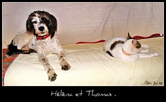 Hlna et Thomas . (Jolisa) Tags: dog chien cat nikon chat animaux amis chienetchat