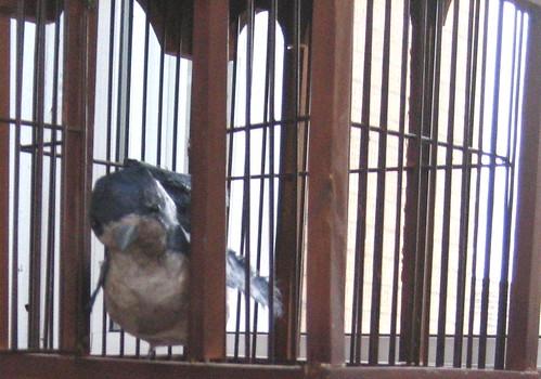 paper mache bird 3