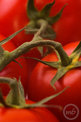 Tomato (m6sport) Tags: red food plant green cooking set bar tomato photo salad frames juicy healthy shiny drink sauce juice farm background mary spice cook tasty vegetable sandwich fresh tomates minimal gourmet pizza cocktail eat health crop vegetarian produce spicy bloody diet agriculture shape product salat seedling oregano freshness vitamin transplant vermelhos seedbed nurseling colorphotoaward m6sport m6photocom wwwm6photocom httpm6photocom