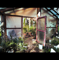 PLASTIC GLASS HOUSE (Elena Fedeli) Tags: door italy plants italia shadows shades porta serra piante glasshouse marche jesi capannone photographyrocks beautyunnoticed