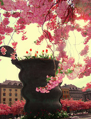 cherryblooms and a pot (Per Ola Wiberg ~ powi) Tags: flowers beautiful niceshot sweden stockholm april blommor breathtaking cherrytrees kungstrdgrden flickrcolors friendsforever 2011 otw finegold photohobby zafiro kungsan goldheart mywinners ourfaves flickraward flickrbronzeaward heartawards diamondstars eperke exemplaryshotsflickrsbest excapture shiningstar magicaltouch highqualityimages beautifulshot grupodehablahispana brilliantphotography photographerparadise naturescreations artofimages amazingnaturephotos youandtheworld flickrsgottalent bestpeopleschoice perfectioninpictures poppyawards flickrshutterspace vangoghaward fireworksofphotos flickrbronzetrophygroup exaltedgloriousnature hellofriend nossasvidasnossomundos photohobbylevel2 3starsaward amazingandperfect theinspirationgroup agroupofhonestpeople legrupos