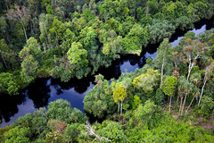 Indonesian rainforest (Greenpeace UK) Tags: trees green indonesia outdoors flora rainforest day wildlife aerialview swamps wetlands forests indonesian biodiversity peatland