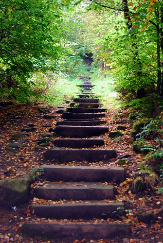 Steps in the Woods by Tim Green aka atoach, on Flickr