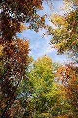 L'automne multicolore