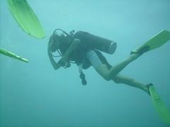 PICT0072 (JoseQ) Tags: blue mar hole great tiburones buceo caribe submarinismo tiburón