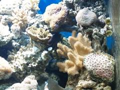 P9283406 (shayoctave) Tags: sea fish tan shay