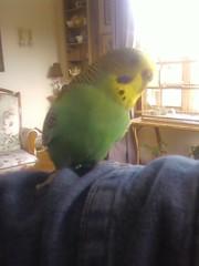 Bird On My Arm