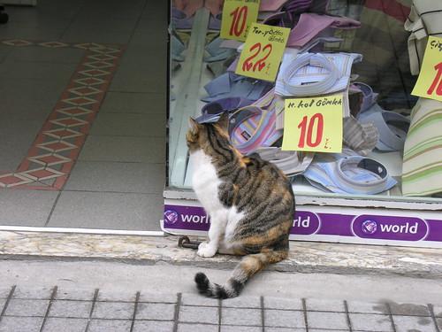 Tipikus Istanbuli jelenet: Ha leárazás van a ruháknál, akkor ott megjelennek a macskák is