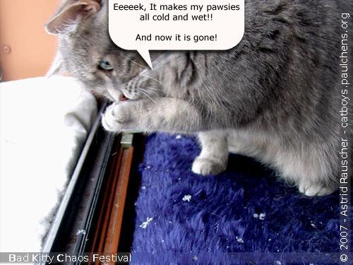 Bad Kitty Cat Festival Of Chaos No.18 - 03