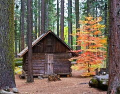 Nelder Grove cabin