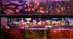 One girl and lots of fishies (inferno artist) Tags: urban woman fish night hongkong aquarium flat chinese    185 nikond80