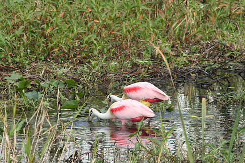 Bear Swamp & 75 birds 2-3-08 326