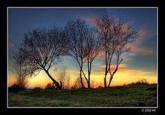 Trees (Mariusz Petelicki) Tags: sunset poland polska hdr zachd 3xp canon400d mariuszpetelicki