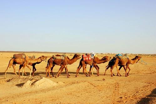 MERZOUGA-SAHARA-2008 128