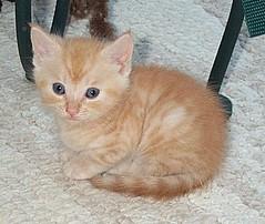 I am Precious too! (JaguarJulie) Tags: cats club cat julie country jaguar cats julie3jax feral colony stray julie