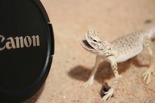 Canon =D