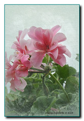 Un fiore con texture (Andrea Rapisarda) Tags: italy flower texture italia fiore diamondclassphotographer flickrdiamond sonydsch9 fanflickrtastic rapis60 auniverseofflowers andrearapisarda beautifulsecrets