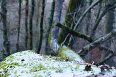 20170107_Gorge_du_Fier (2 sur 14) (calace74) Tags: fier gorgedufier lovagny rhonealpes france gel hiver neige paysage rivière