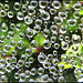 cobweb droplets by Capt' Gorgeous