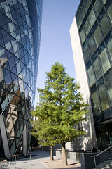 london5 (Nizam Uddin) Tags: urban building tree green london financialdistrict urbanjungle gherkin swissre 30stmaryaxe thegherkin cityoflondon nizam uddin swissrebuilding swissrecentre nizamuddin theswissretower nizamsphoto