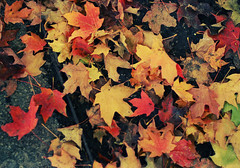 Autumn Leaves (.onthemoon) Tags: onthemoon