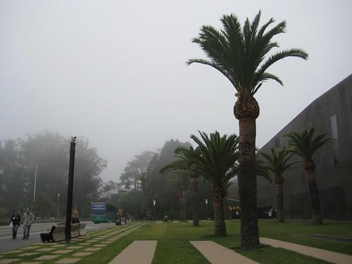 Fog / Palm Trees / Classic