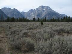 Sage Stage (dclamster) Tags: mountain green sage tetons mtmeron