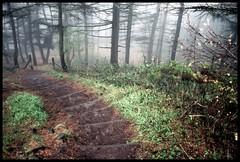 (andrewlee1967) Tags: uk england mist woods bravo steps saddleworth andrewlee mywinners canon400d andrewlee1967 focusman5