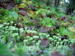 Twin Lakes Lichen (Tulse) Tags: frost lichen twinlakes