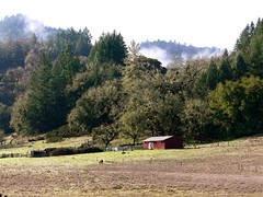 Shed & Fog (judi berdis) Tags: usa nca willits mendocinocounty