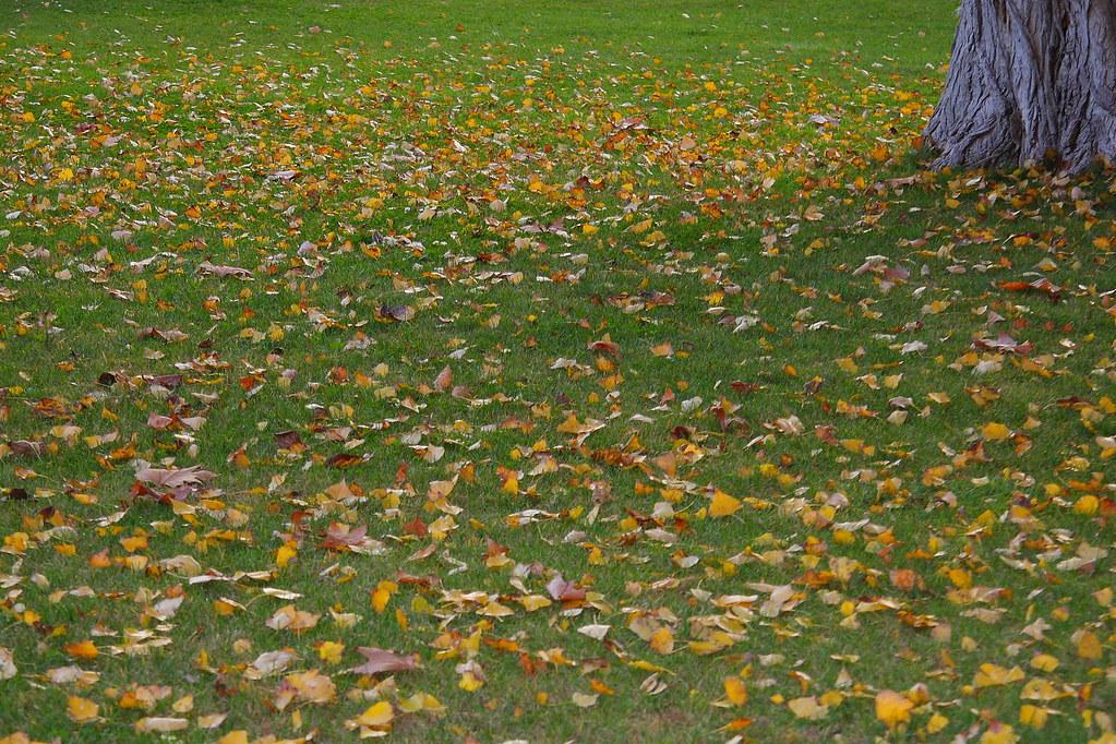 Fallen leaves #01