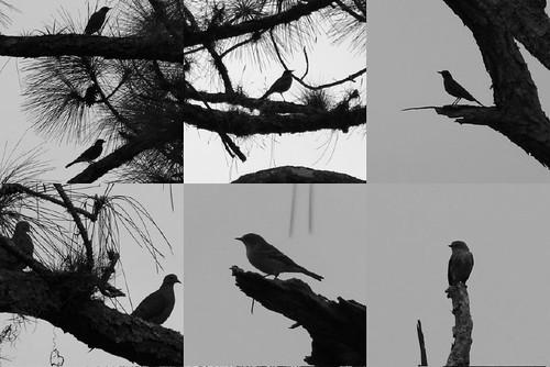 birdsilouette
