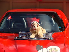 Xmas at Cromwell's in Nov 061 (redvette) Tags: christmas corvette redvette tomhiltz