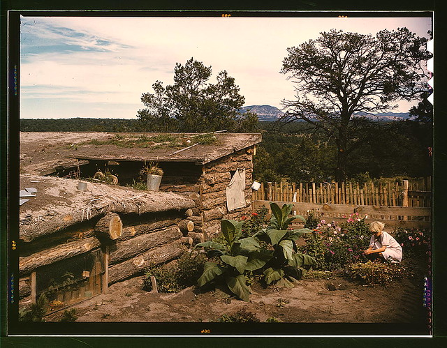 Garden adjacent to the dugout home of Jack Whinery, homesteader, Pie Town, New Mexico (LOC)