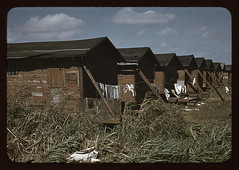 Houses which have been condemned by the Board of Health but are still occupied by Negro migratory workers, Belle Glade, Fla.  (LOC)