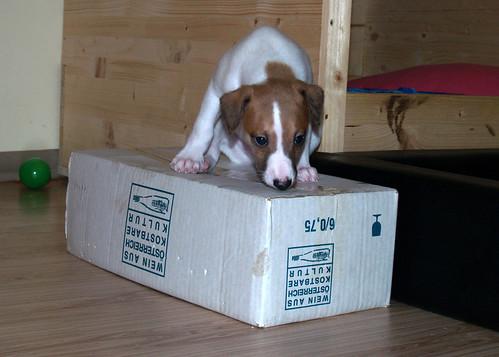 Armadillo und die Schachtel