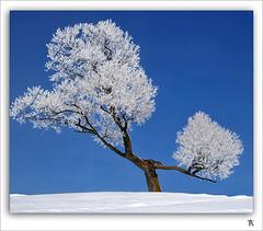 PomPoms Girl (Renald Bourque) Tags: winter snow canada quebec hiver neige icy frimas beautifulpix lefion mywinners bratanesque goldstaraward bestminimalshot mpdquebec