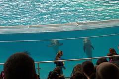 Aquarium Fieldtrip (jtcoleman) Tags: flickrcom