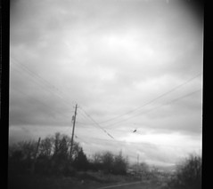 It's a helicopter.... (go-bunny) Tags: holga horrors thingswithwings