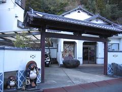 Tanuki in Shimoda (only1tanuki) Tags: japan tanuki     izupeninsula  shizuokaprefecture   20 shimodacity