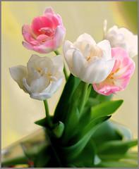 (Cliff Michaels) Tags: flowers photoshop d50 flora nikon colorful tulips closeups michaels capturenx tennpenny photoscliff