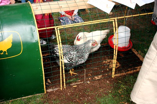 Tiny Chicken Coop