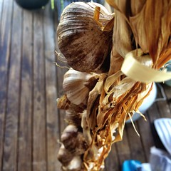 Juleen's plaited homegrown garlic